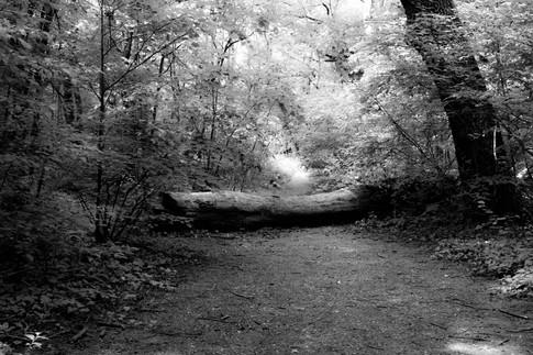 Forest fairytale3.jpg