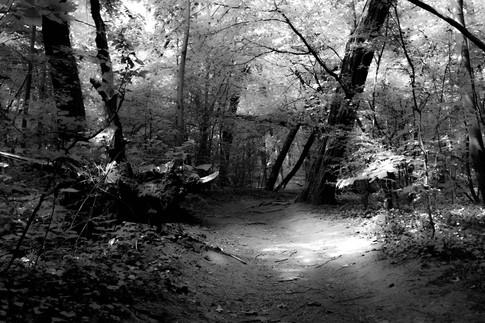 Forest fairytale5.jpg
