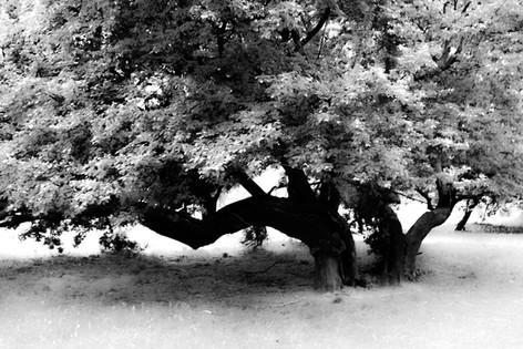 Forest fairytale20.jpg