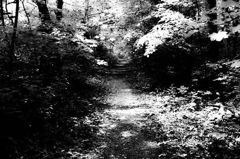 Forest fairytale.jpg