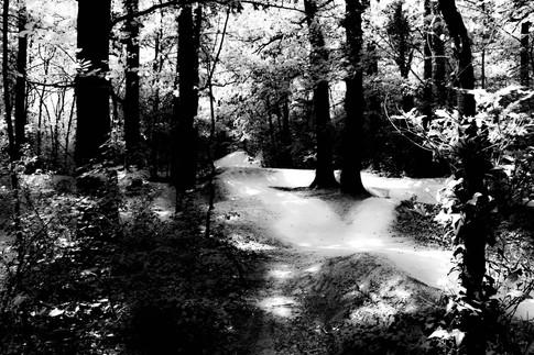 Forest fairytale11.jpg