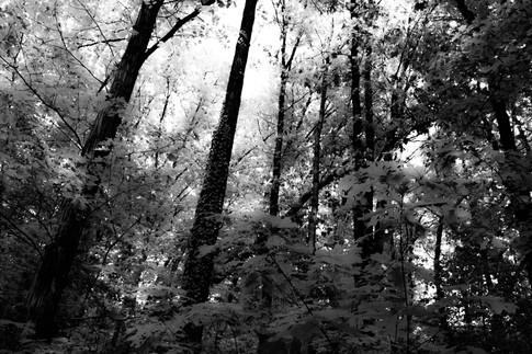 Forest fairytale10.jpg