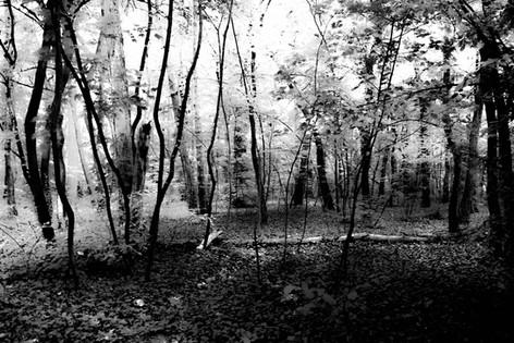 Forest fairytale18.jpg