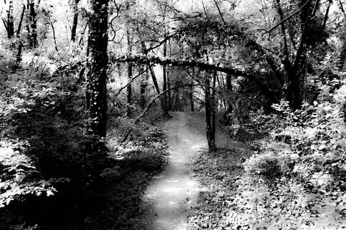 Forest fairytale16.jpg