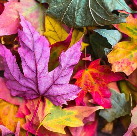 Perfect Leaf Poems