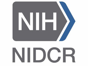 The National Institute of Dental and Cranial Research (NIDCR) has awarded Fan Yang lab an R01!
