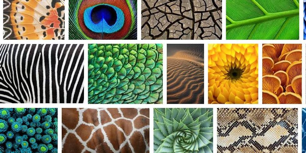 Biomimicry: Using Nature's Genius in Art