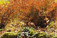 Natura selvatica nei boschi