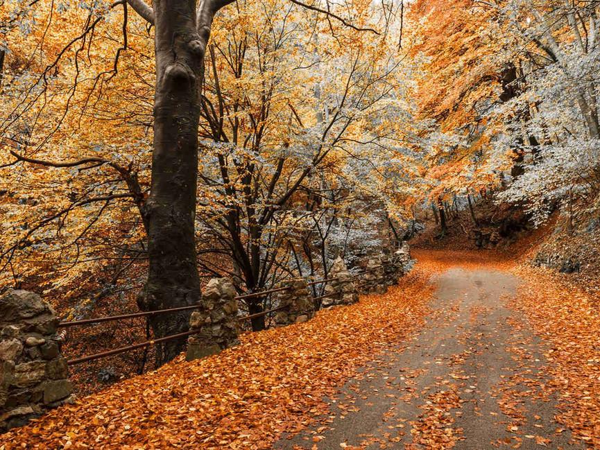 Via per Sacro Monte di Varese