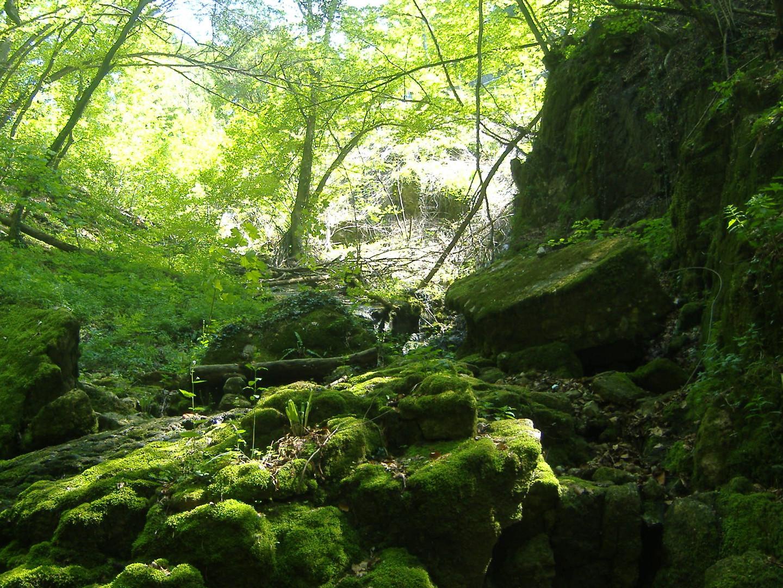 Tra boschi e laghi