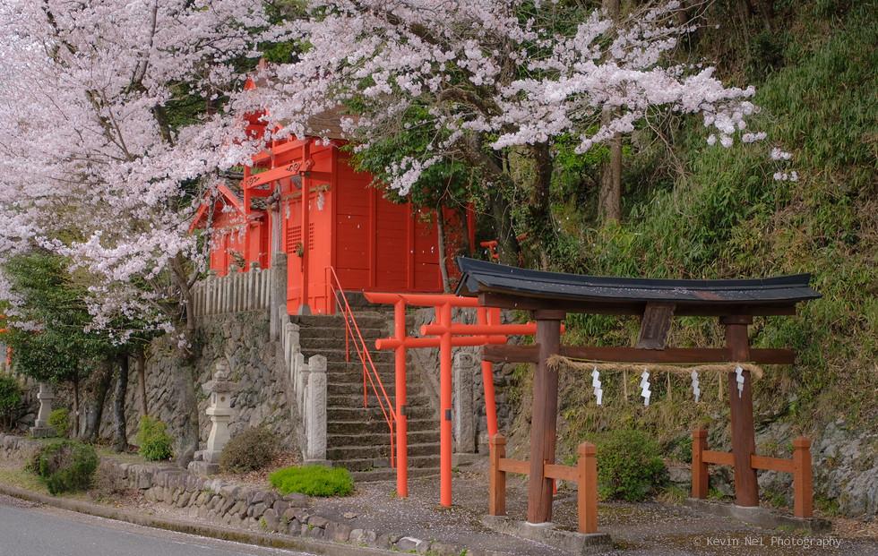崎山稲荷神社 Sakiyamainari Shrine