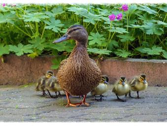 מנהיגות הורית