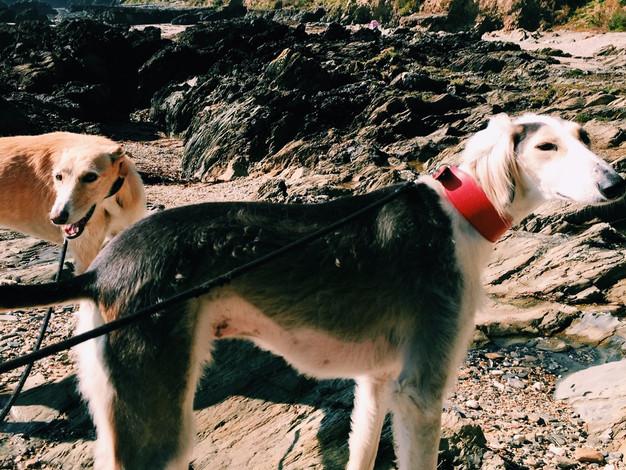 Aslan + Milly, Saluki's