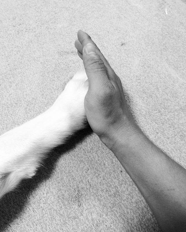 手と手。tete