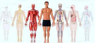 réflexologie plantaire naturopathie nutrition massages