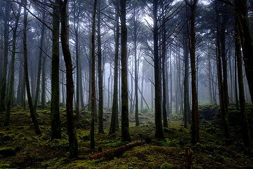 Floresta Encantada