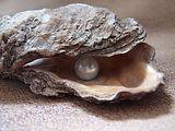 oyster-1327311_1920.jpg