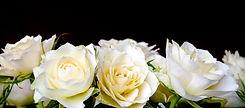roses-2198156_1920.jpg