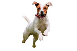 dog run.png