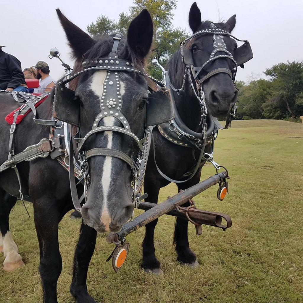 fff horse drawn wagon (2).JPG