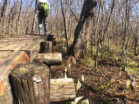 ミズバショウの森 プチハイキング