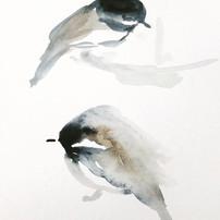 chickadees study