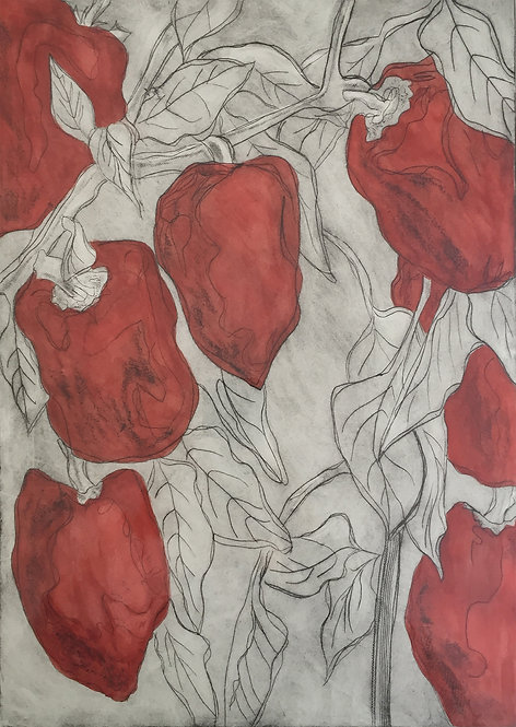Peppers 'Dark Red' - Drypoint