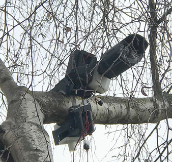 Temporary camera installed in a tree using Quickclamp
