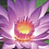 Thumbnail: Lotus