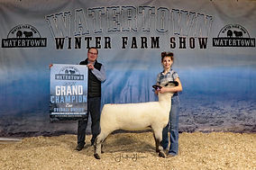 Sheep Grand Overall Ewe - Fuller Sheep F