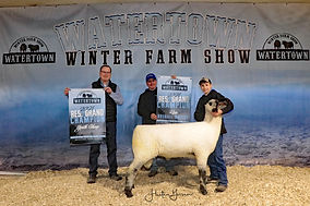 Youth Sheep Reserve Champion - Ignatius