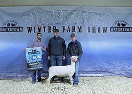 Sheep Southdown res Gullickson Family Li