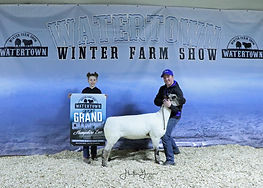 Sheep Hampshire Gr Dusty and Ty Fuller F