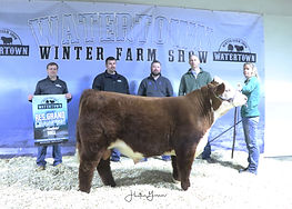 Hereford Bull Res Hanson's Polled Herefo
