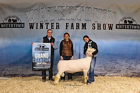 Youth Sheep Grand Champion - Josie Nold.