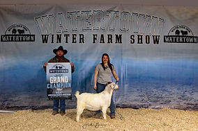 Meat Goat Grand Champion - Heartland Sav