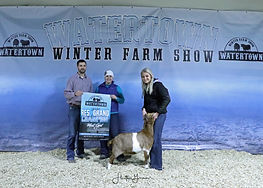 Goat Res Circle P Showstock.jpg