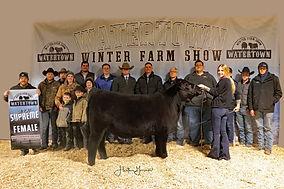 Supreme Heifer Gr NTM Cattle Company.jpg