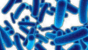 bacteria (2).png