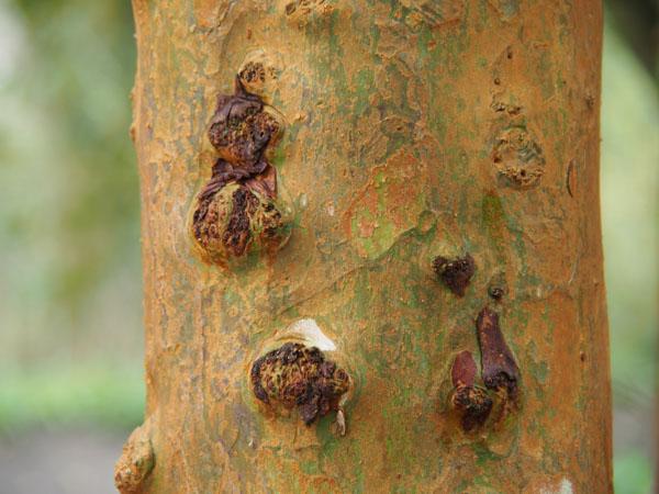 Tree bark detail