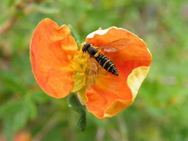 Orange and insect