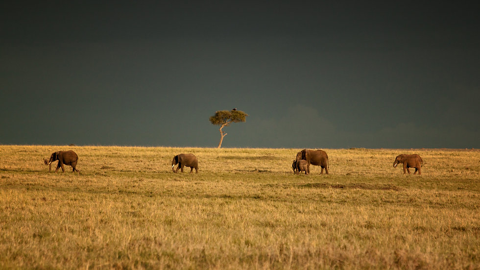 Storm Coming In The Masai Mara