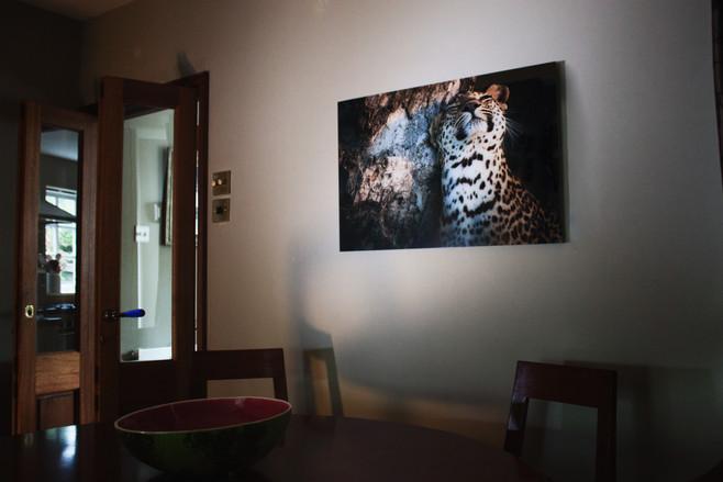 Leopard Scent Marking A Tree
