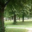 arbres campus.jpg
