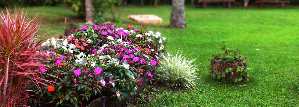 Jardim repleto de lindas flores.