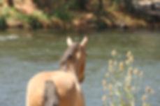 Helona by the Klamath River