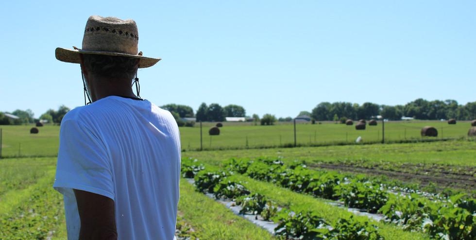 Pat & Rachel's Garden_ Organic Farm