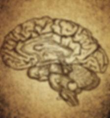 Brain Sketch_edited.jpg