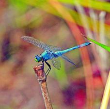 Nature's Beautiful Palette
