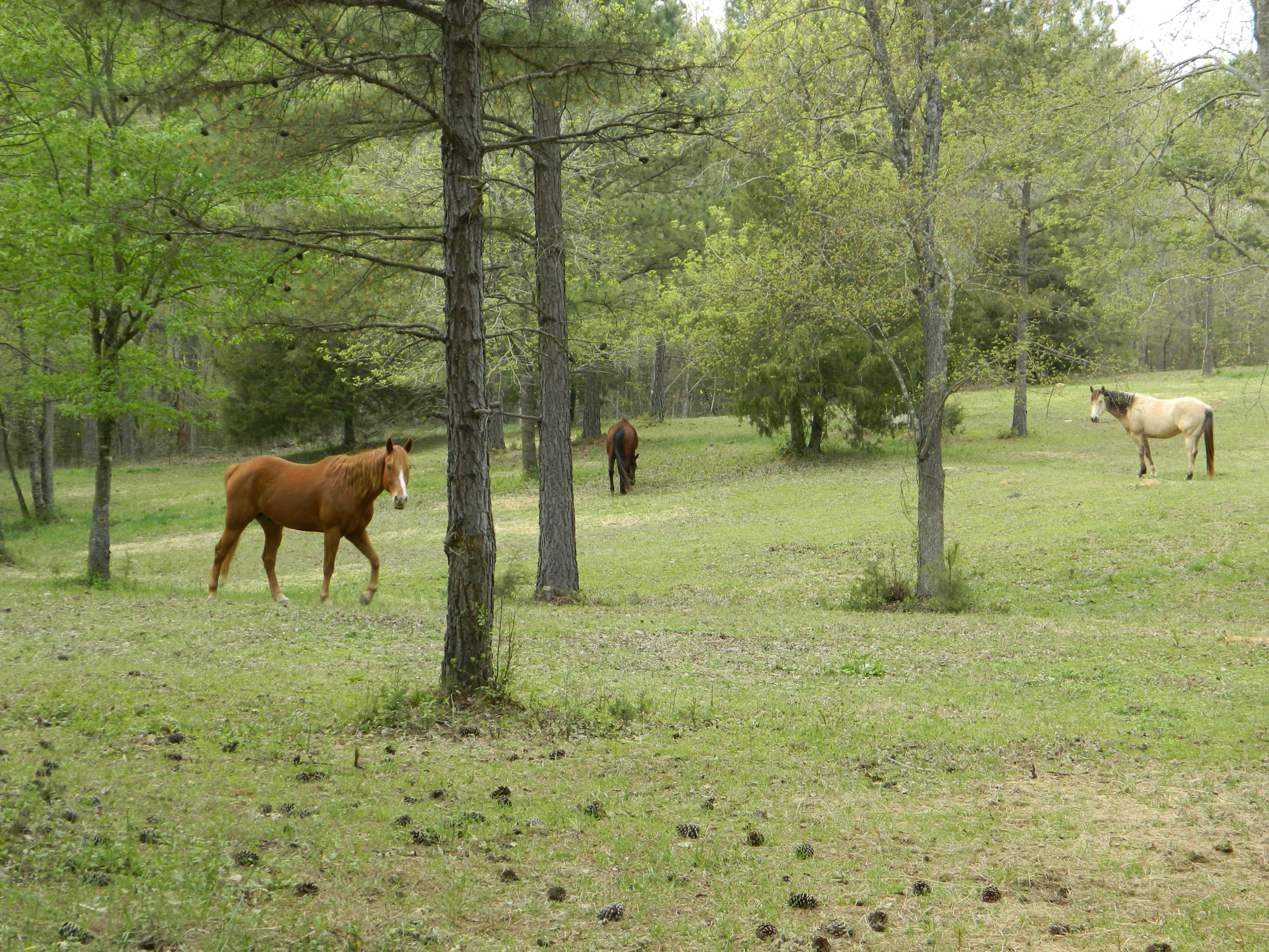 Horses are Special in Lancaster Community - Colleen Siegel